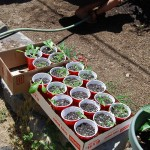 Plants from seeds that Paul was working on. I think mainly lettuce, spinach and peppers.