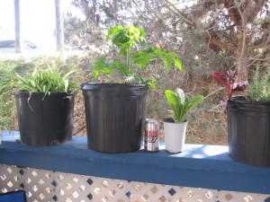 Agridude - Patio Garden Beginning