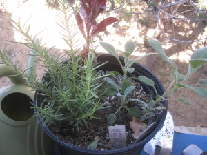 Agridude - Patio Garden Sage and Rosemary