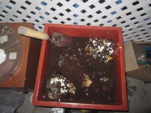 Agridude - Worm Bin with crushed egg shells