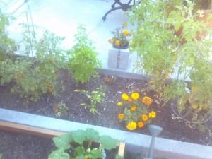 Main plot garden
