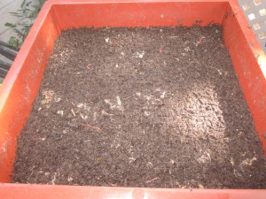 Agridude - Finished Vermicompost Tray