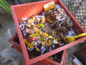 Agridude - Food Scraps on top of Bedding