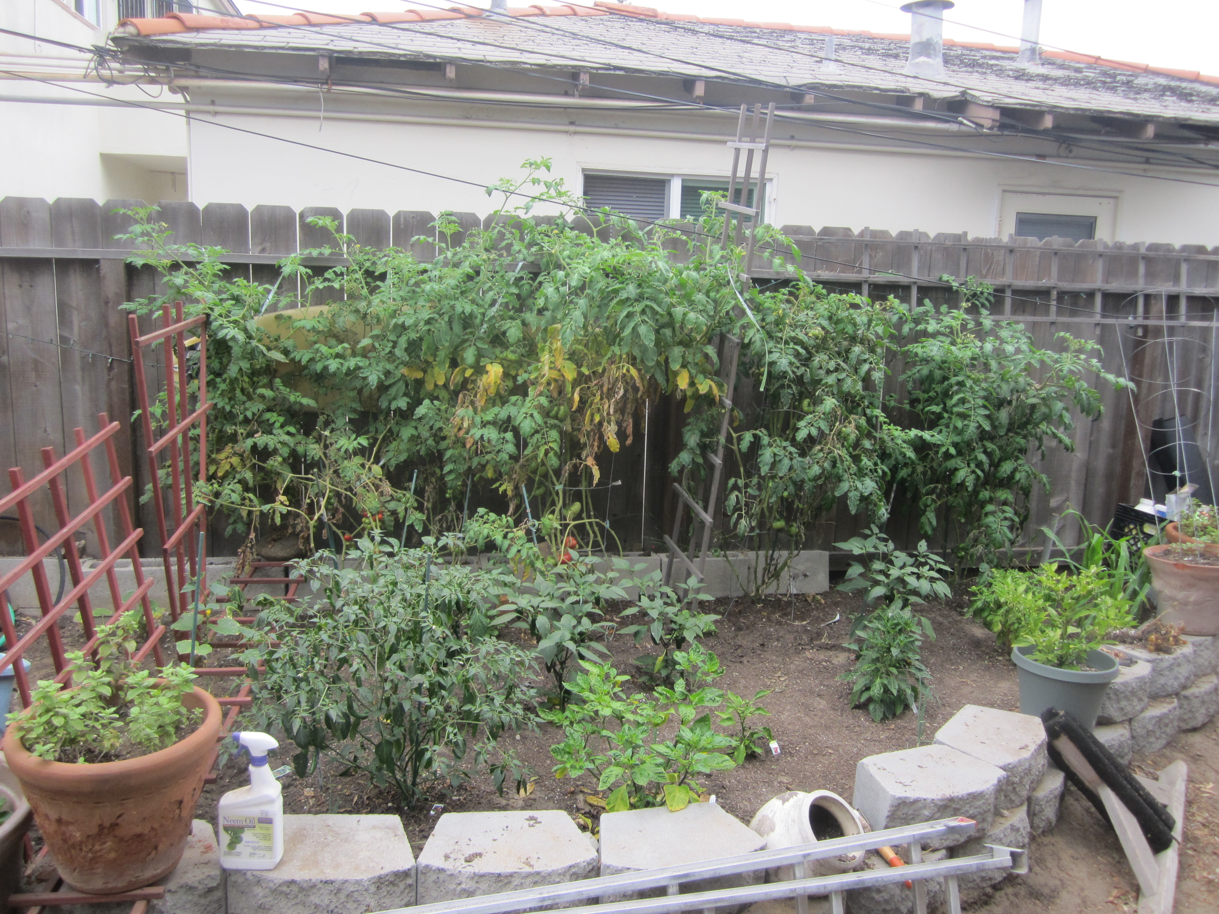 Cape mayhem garden update tomato questions agridude for Gardening questionnaire