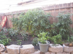 Agridude - Garden after cleaning