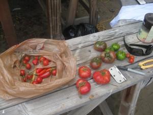 Agridude - Garden Harvest
