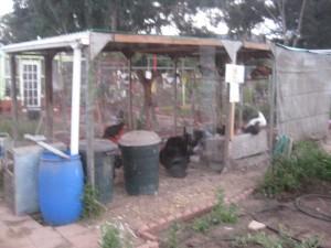 Agridude - Chicken Coop