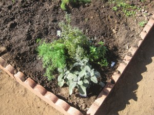 Agridude - Herb Corner with Dill and Oregano
