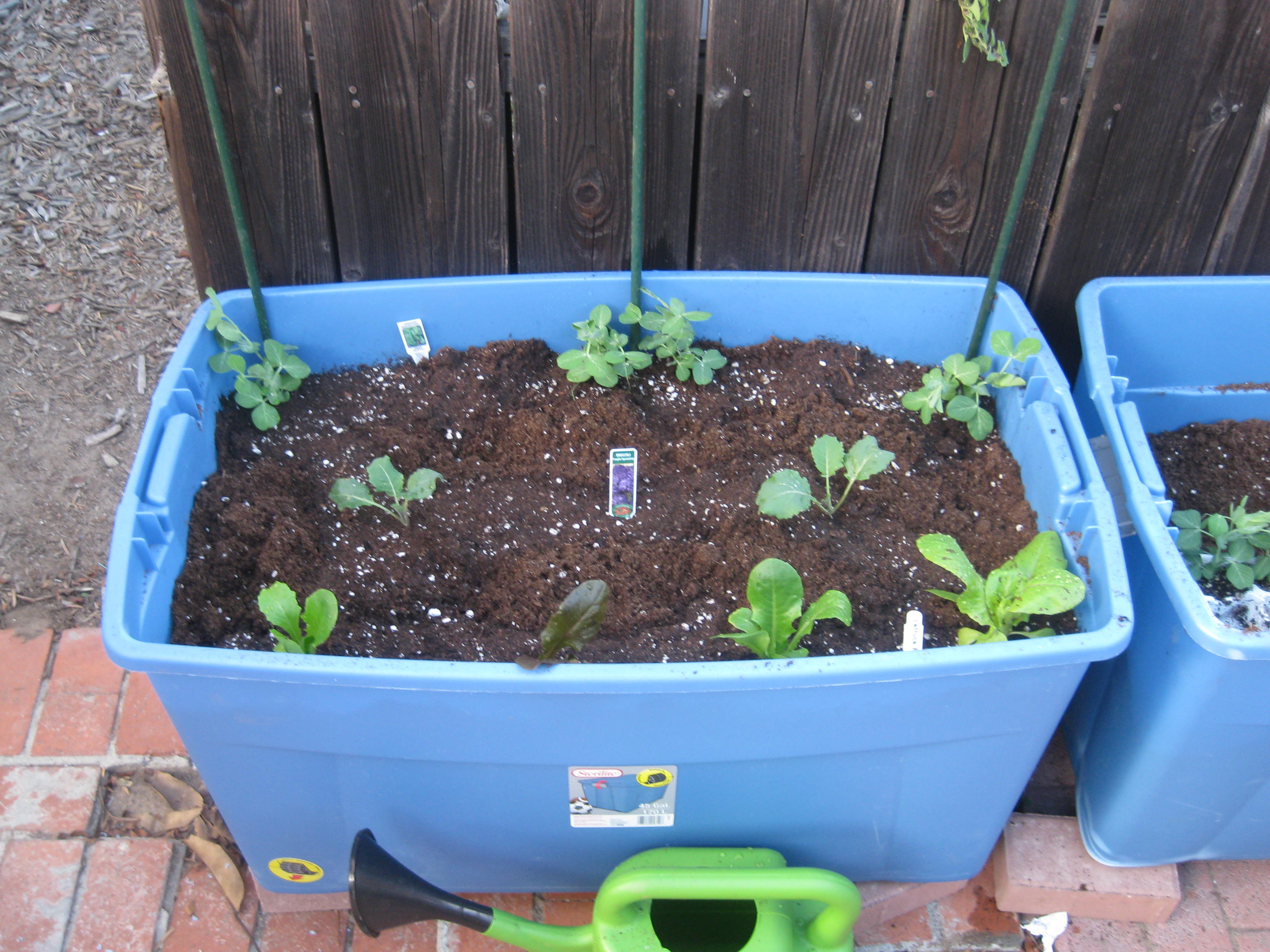 Recycled plastic storage boxes - Agridude Peas Broccoli Romaine