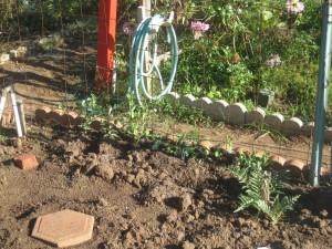 Agridude - Peas along fence