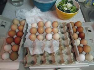 Agridude - Eggs