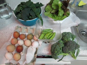 Agridude - Eggs Peas Broccoli Romaine Kale