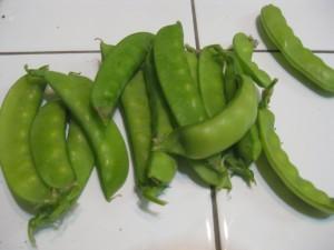 Agridude - Peas