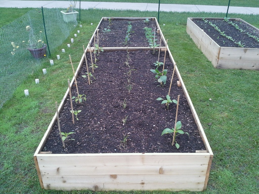 Peppers, Onions, Kale