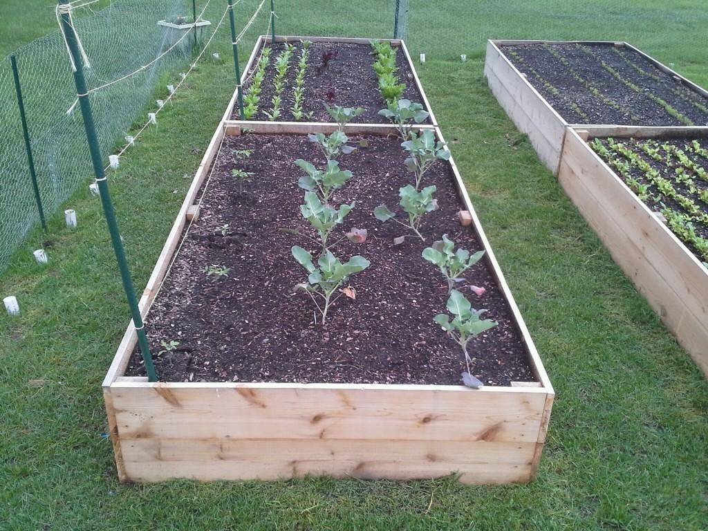 Broccoli, Toms, Lettuce, Spinach